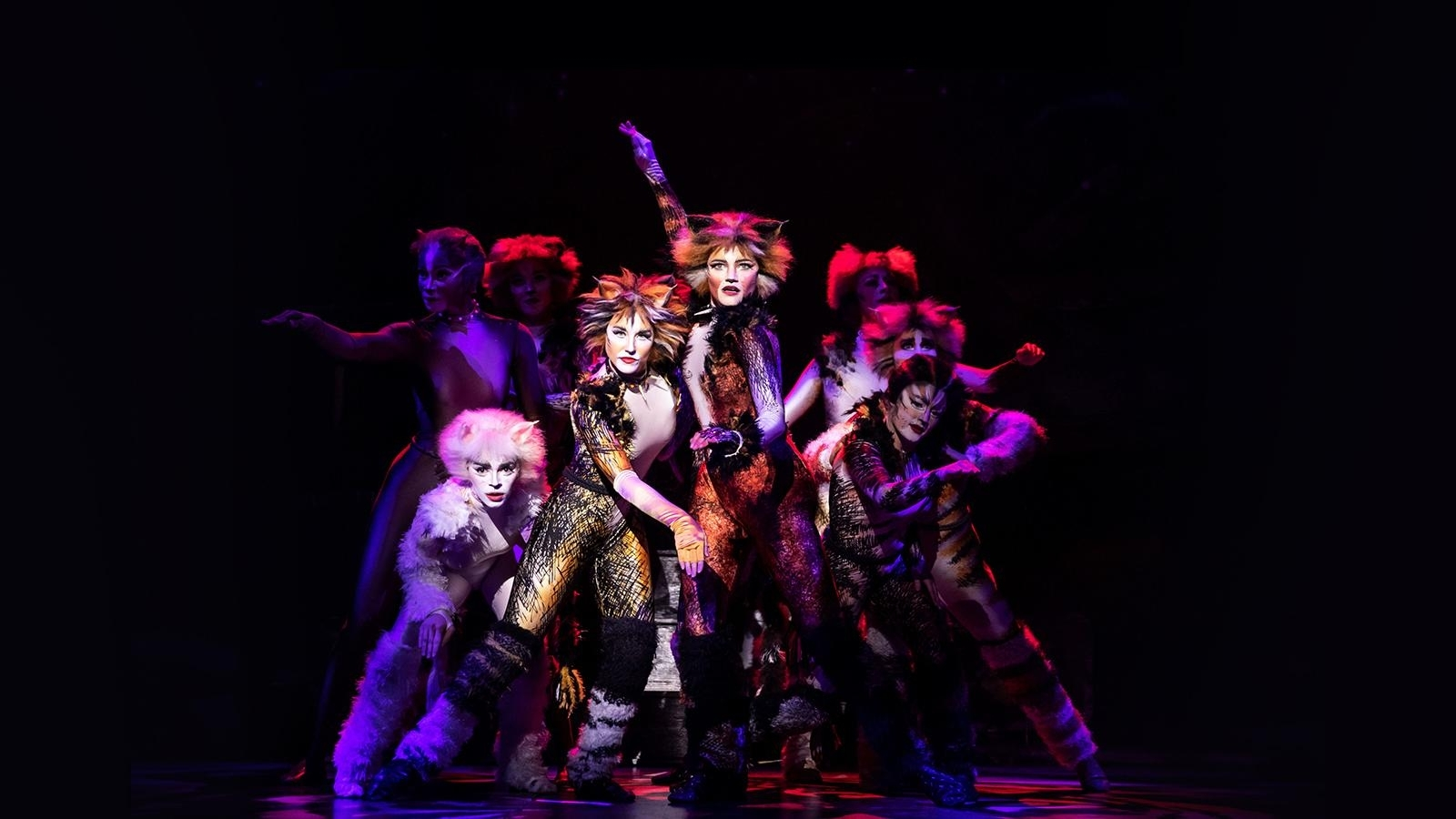 Cats | Sat Feb 22, 2020 8:00 Pm | Barbara B. Mann Performing