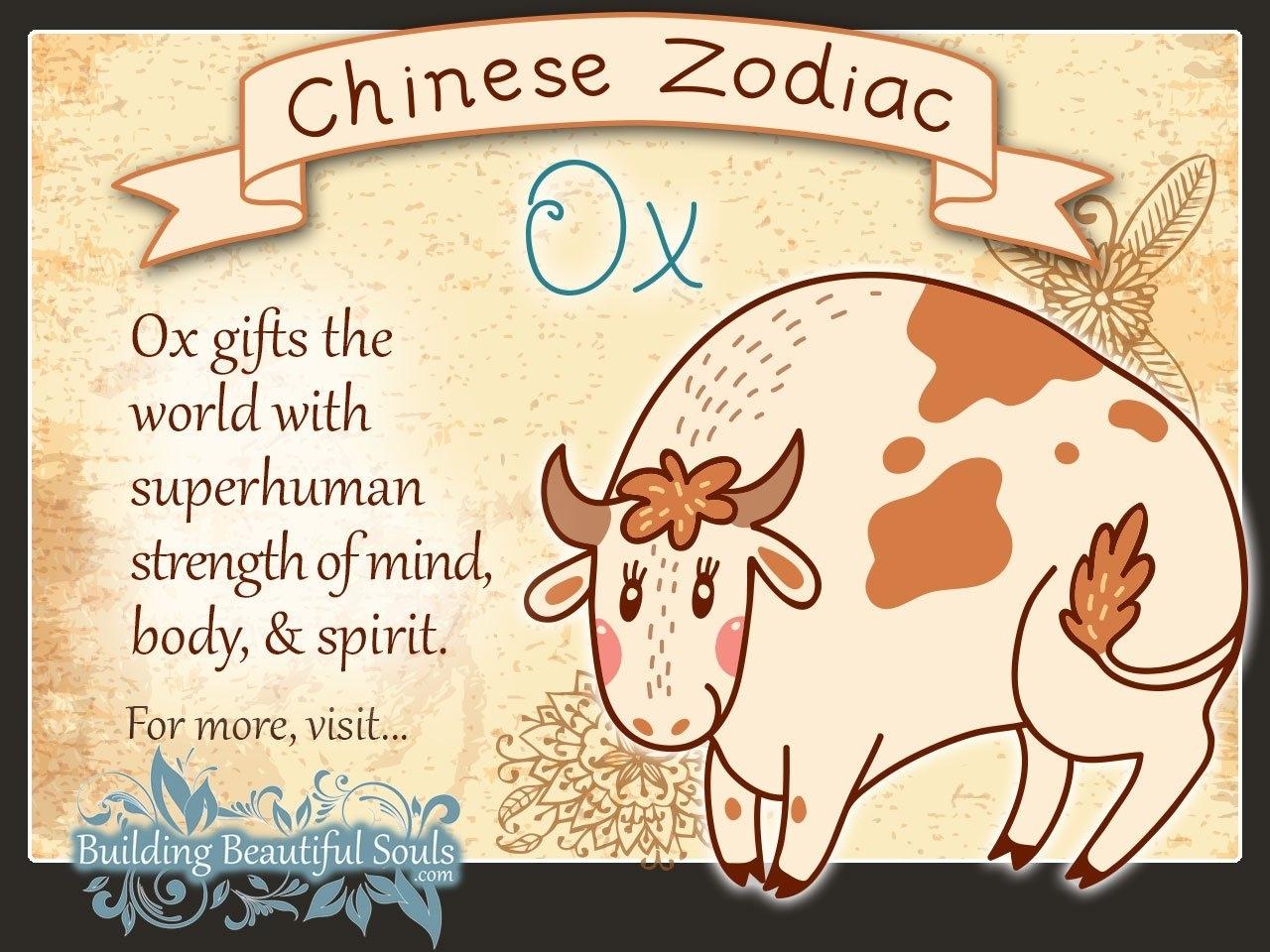 Chinese Zodiac Ox Child Personality & Traits | Chinese