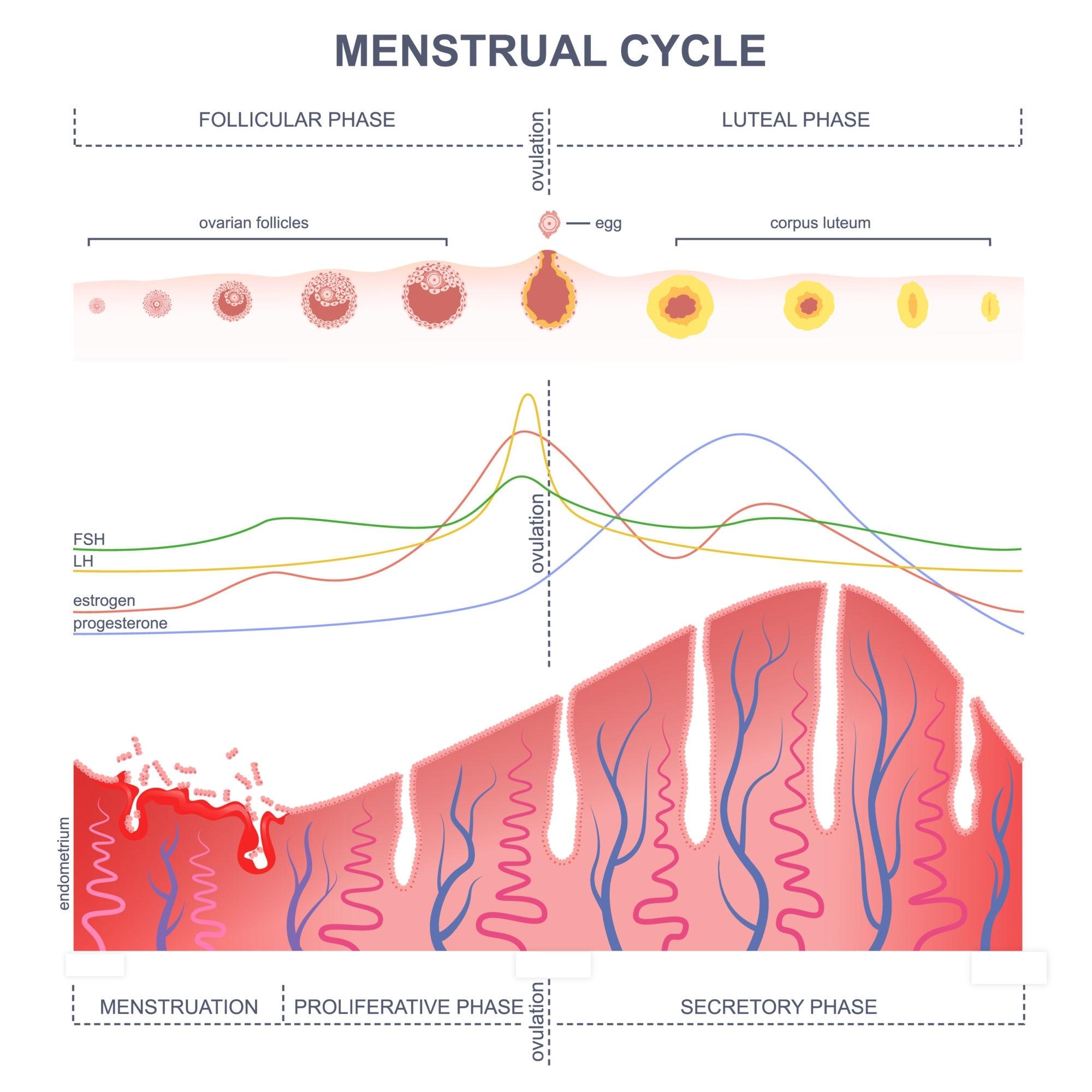 Ovulation Questions - American Pregnancy Association