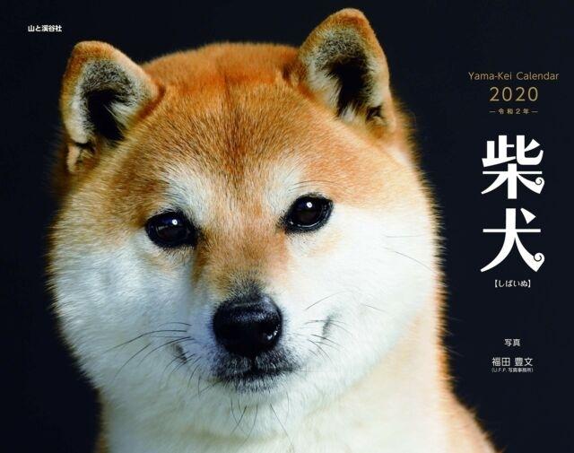 Shiba Dog 2020 Japanese Calendar Shiba Inu From Japan   Ebay